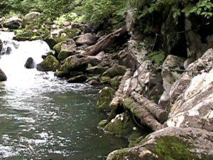 布部川にかけられた丸太の足場