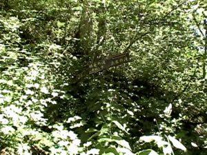 赤岩の滝勝竜の滝分岐