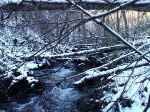 錦糸の滝手前の倒木の山