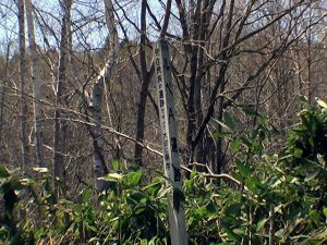 先住民族の遺跡 柱