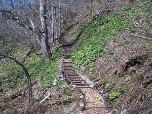 比翼の滝遊歩道