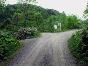 林道分岐は左へ