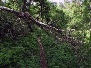 男鹿の滝までの遊歩道