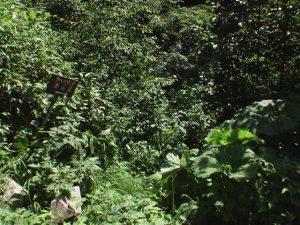 ウペペサンケ東登山道入り口