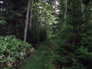 倒木の向こうは滝へ通じる道か