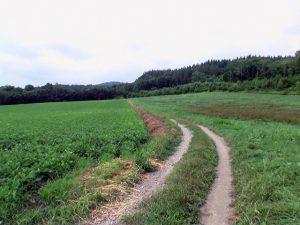 車体をこすりながら進む農道