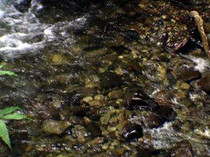 ひたすらきれいな川の水
