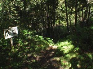 林道から滝へ向かう遊歩道