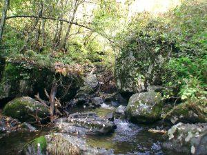 聖の滝がかかる沢の様子3