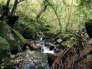 聖の滝がかかる沢の様子4
