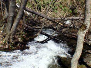 滝の下の倒木