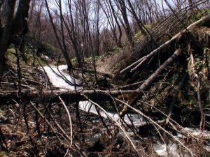 八垂別の滝を下から撮影