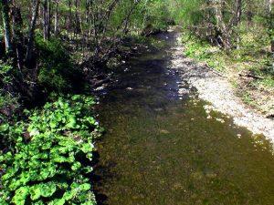 ショロマ川