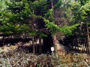 記念植樹に感激