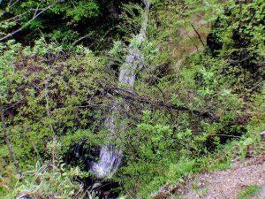 薮蚊橋下の滝