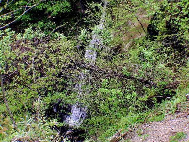 薮蚊橋下の滝核心部をねらう
