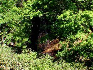 滝見橋の上から撮影