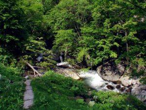 上から見た平田内川上流