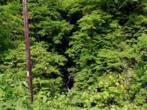 木の葉の間に滝状の流れ
