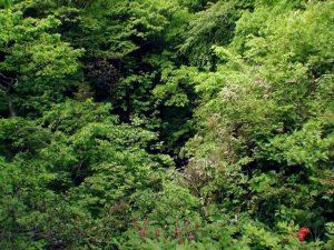 木の葉で滝は見えない