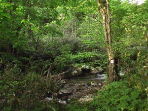 貝取澗渓谷の一場面
