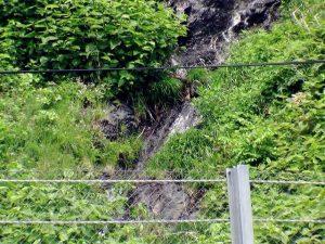 白神の滝の下部アップ