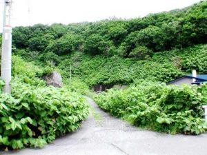 長浜線から林道を見る