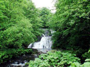 林道から見るオオシュブンナイの滝