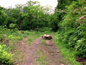 盃川林道に転がる岩