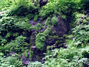 かろうじて濡れている黒い岩肌