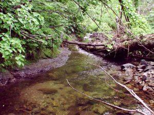 荒れた盃川