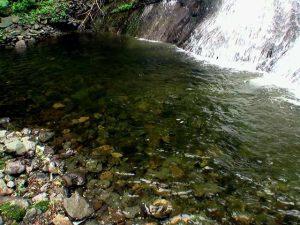盃川上流の滝の滝つぼ