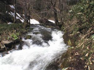 融雪期は笹藪をつかんで高巻いた場所