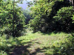 林道終点前の広いスペース