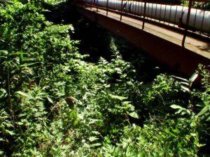 鉄橋の下を進む