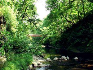泥ノ木川から見る鉄橋