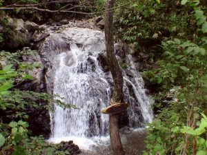 林道から見たブナ滝