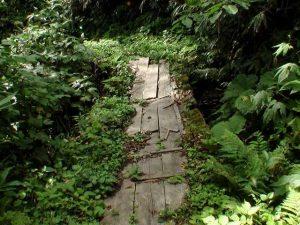 崩れかけた木の橋