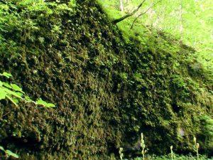 苔に覆われた岩肌