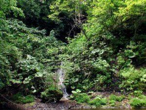 透見の滝 8月