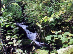 上流の渓流部分
