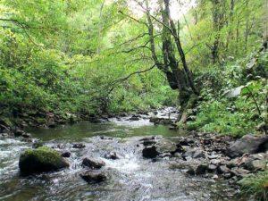 魚留の滝落口付近からソウベツ川上流を見る