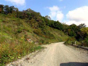 早月の滝看板から 600m進んだ林道分岐