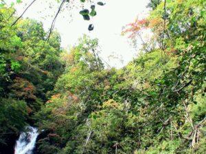 上流の大滝を見たあたりを見上げる