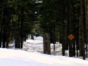 残雪に閉ざされた白金不動の滝への遊歩道