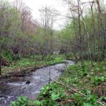 我路の沢川上流の滝状の流れ