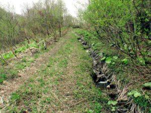 林道の右側に深い溝