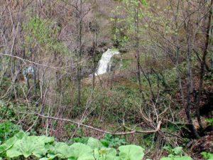 林道から見る歌音の滝