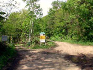 林道分岐と熊注意の看板