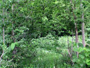 自然のままに草木がのびているだけ